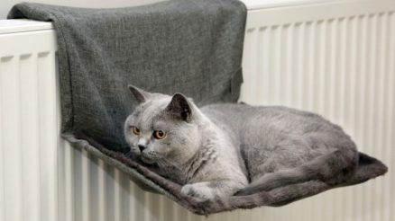 Quel est le meilleur panier de radiateur pour chat photo 3